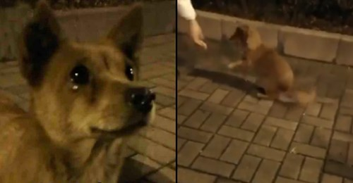 Video shows canine cries tears of joy after receiving food from a stranger