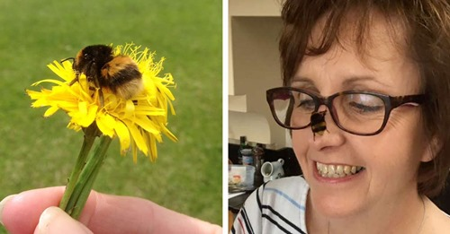 Woman Forms A Beautiful Bond With Bee Who Was In Need Of A Friend